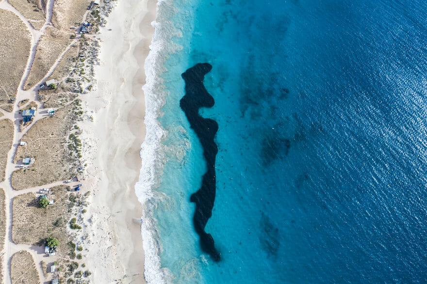tubarões surf austrália 7