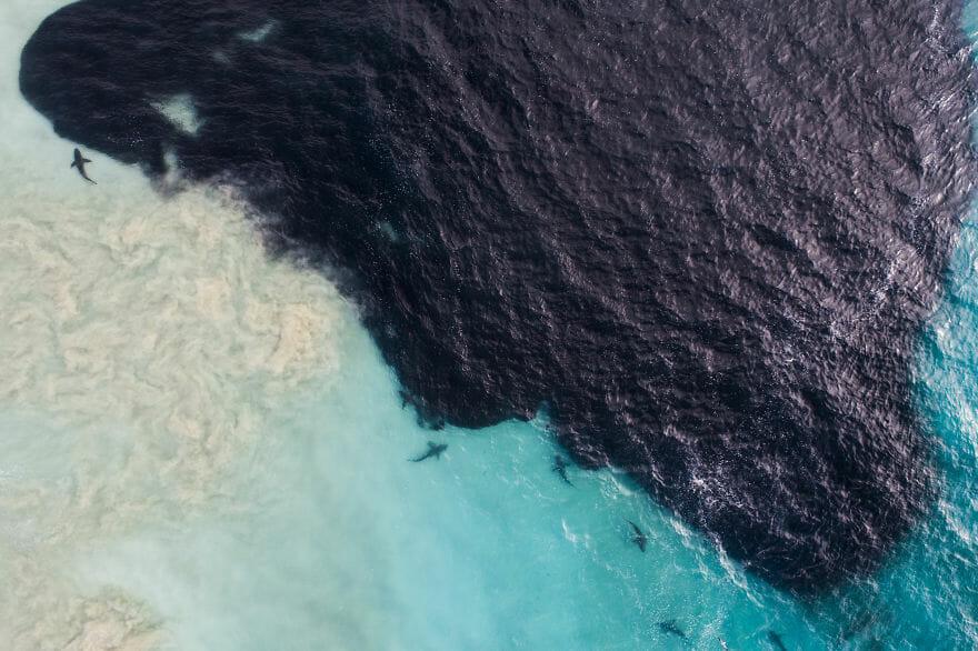 tubarões surf austrália 8