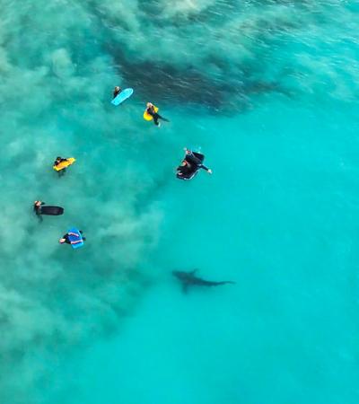 A série de fotos que mostra a 'invasão' de mais de 200 tubarões em praia de surf na Austrália