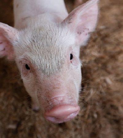 Direito da USP ganha disciplina de direitos animais