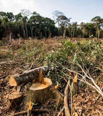 Brasil lidera desmatamento de florestas primárias em 2018, aponta relatório