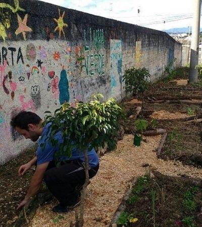 Curitiba libera plantio de hortas nas calçadas. E é hora de espalharmos essa ideia