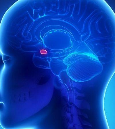 MDMA 'reabre' parte do cérebro que se fecha após a puberdade e nos faz 'jovens novamente'