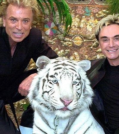 Erros e mentiras: a nova versão sobre o ataque de tigre que chocou Las Vegas