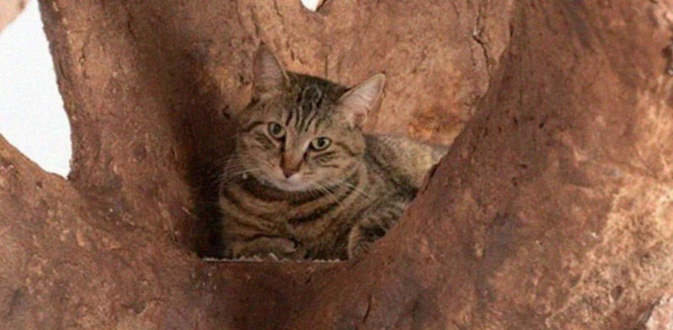 árvore falsa gato 3