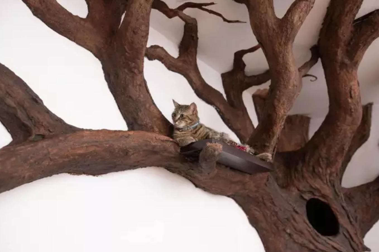 árvore falsa gato 4