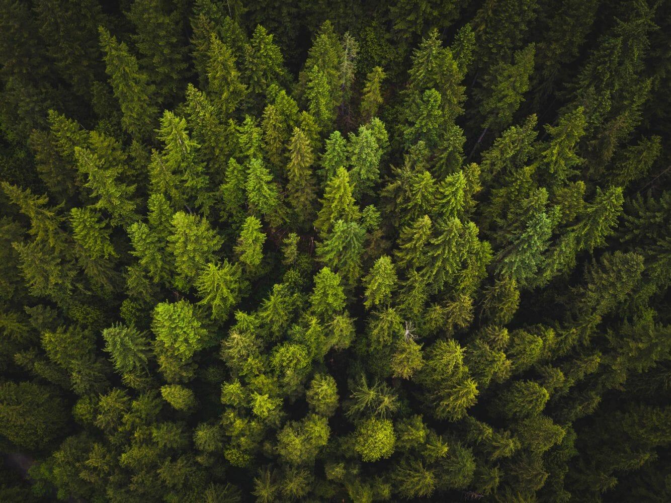 árvores co2 salvar 1