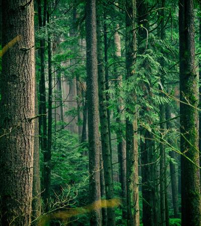 Há tanto CO2 na atmosfera que plantar árvores já não pode nos salvar