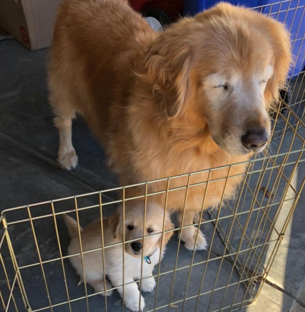 amizade cão guia 1