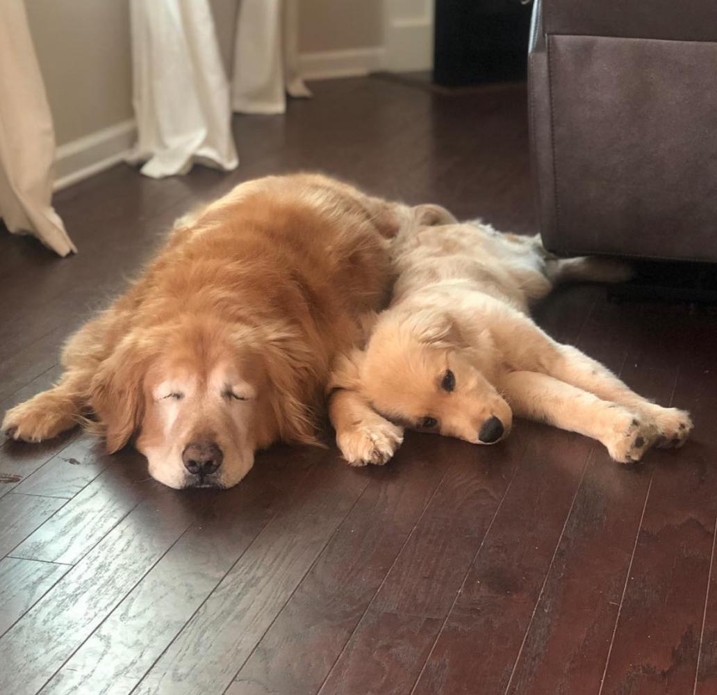 amizade cão guia 2