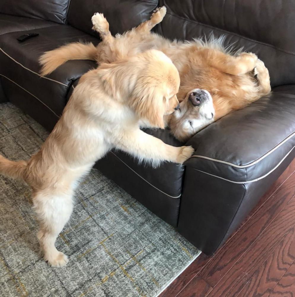 amizade cão guia 3