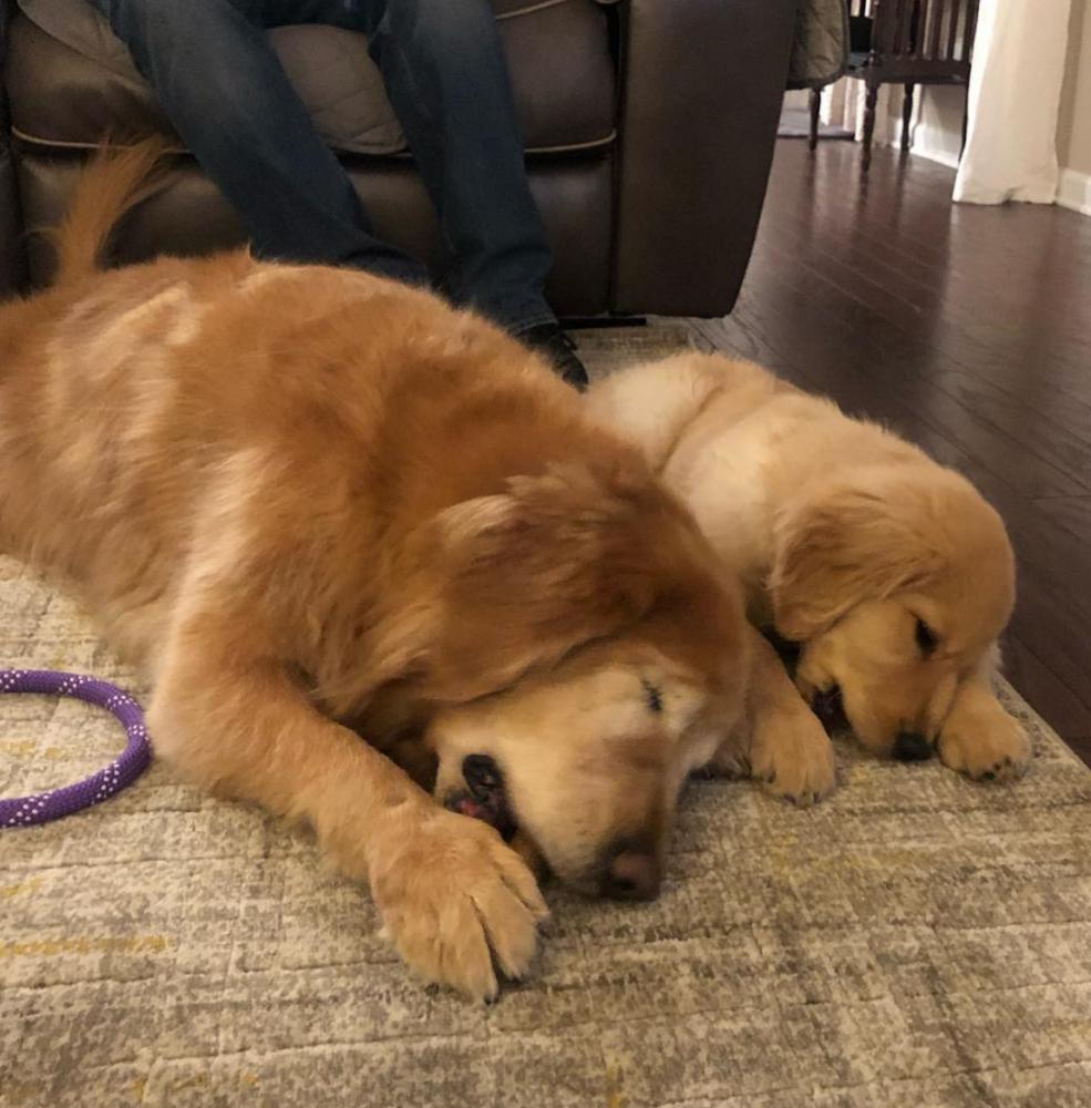 amizade cão guia 5