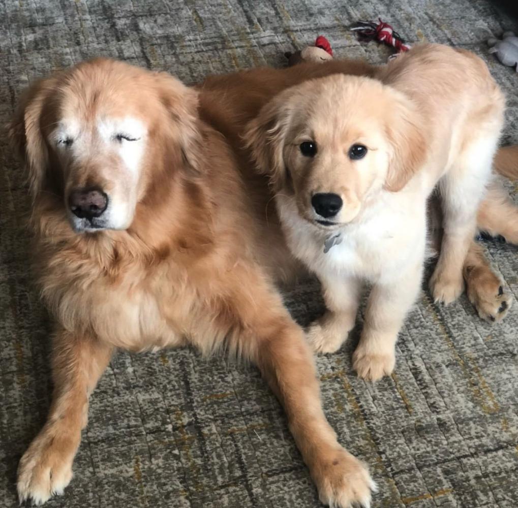 amizade cão guia 6