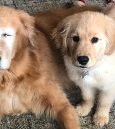 Filhote que virou cão guia de um cachorro cego é a coisa mais fofa que você vai ver hoje