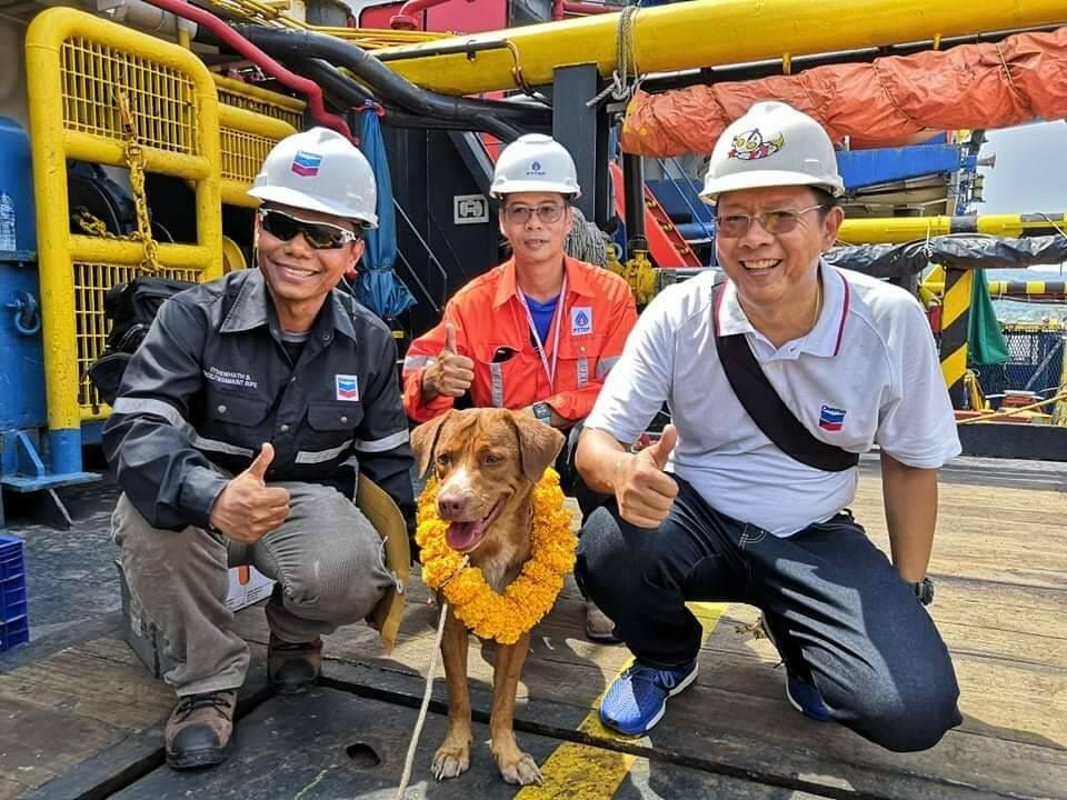 cachorro resgatado oceano 1