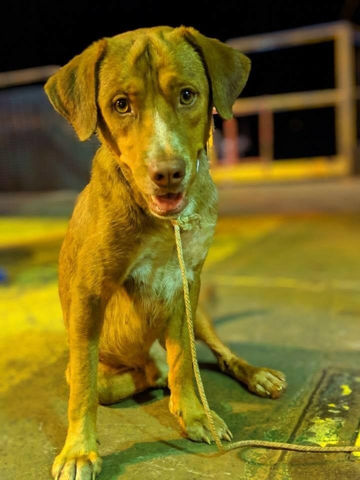 cachorro resgatado oceano 2