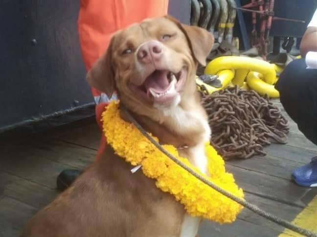 cachorro resgatado oceano 3