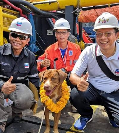 Cachorro nada 220 km e acaba resgatado por trabalhadores em plataforma de petróleo