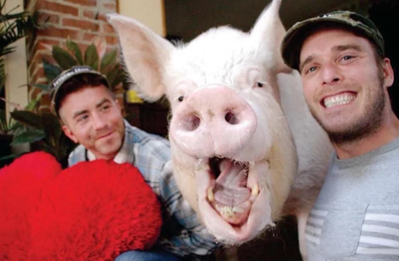 casal adota porco gigante 4