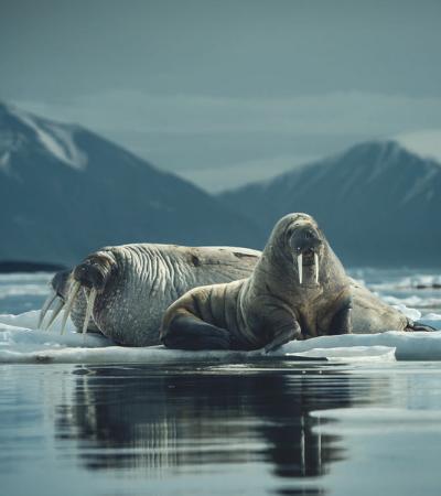 Este casal fotografou os lugares mais remotos da Terra em registros maravilhosos