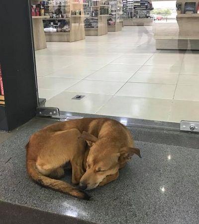 Cão de rua rouba livro de livraria e funcionários ficam chocados ao ver título da obra