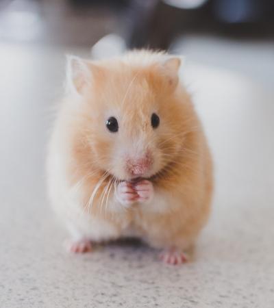 China anuncia fim de testes em animais na indústria cosmética