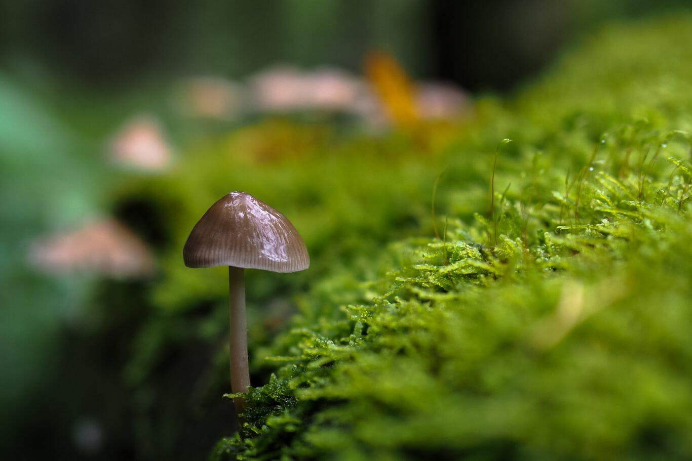 chuva na floresta 1