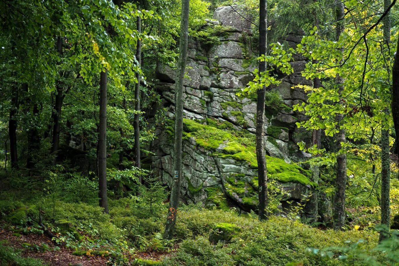 chuva na floresta 10