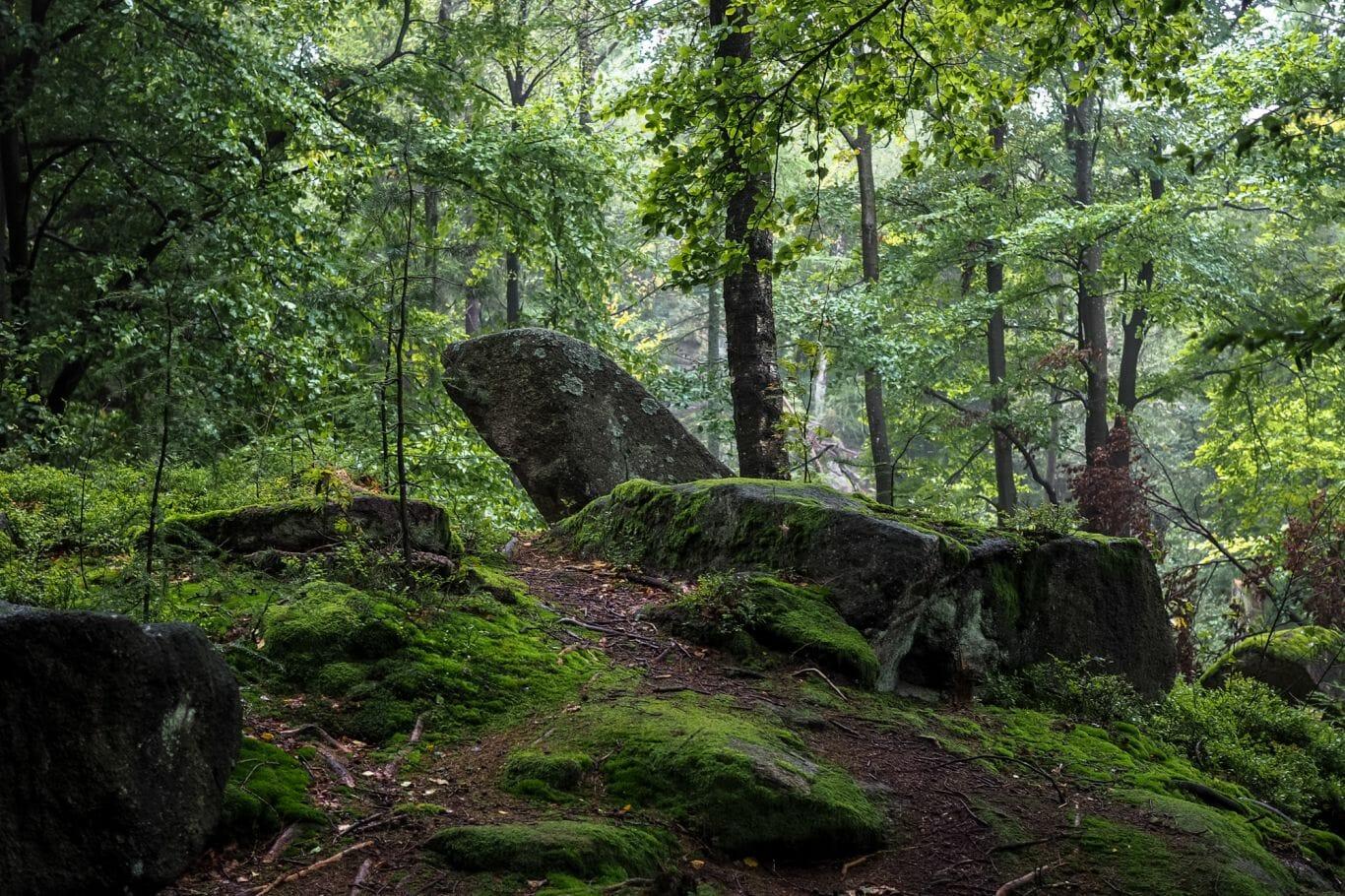 chuva na floresta 4