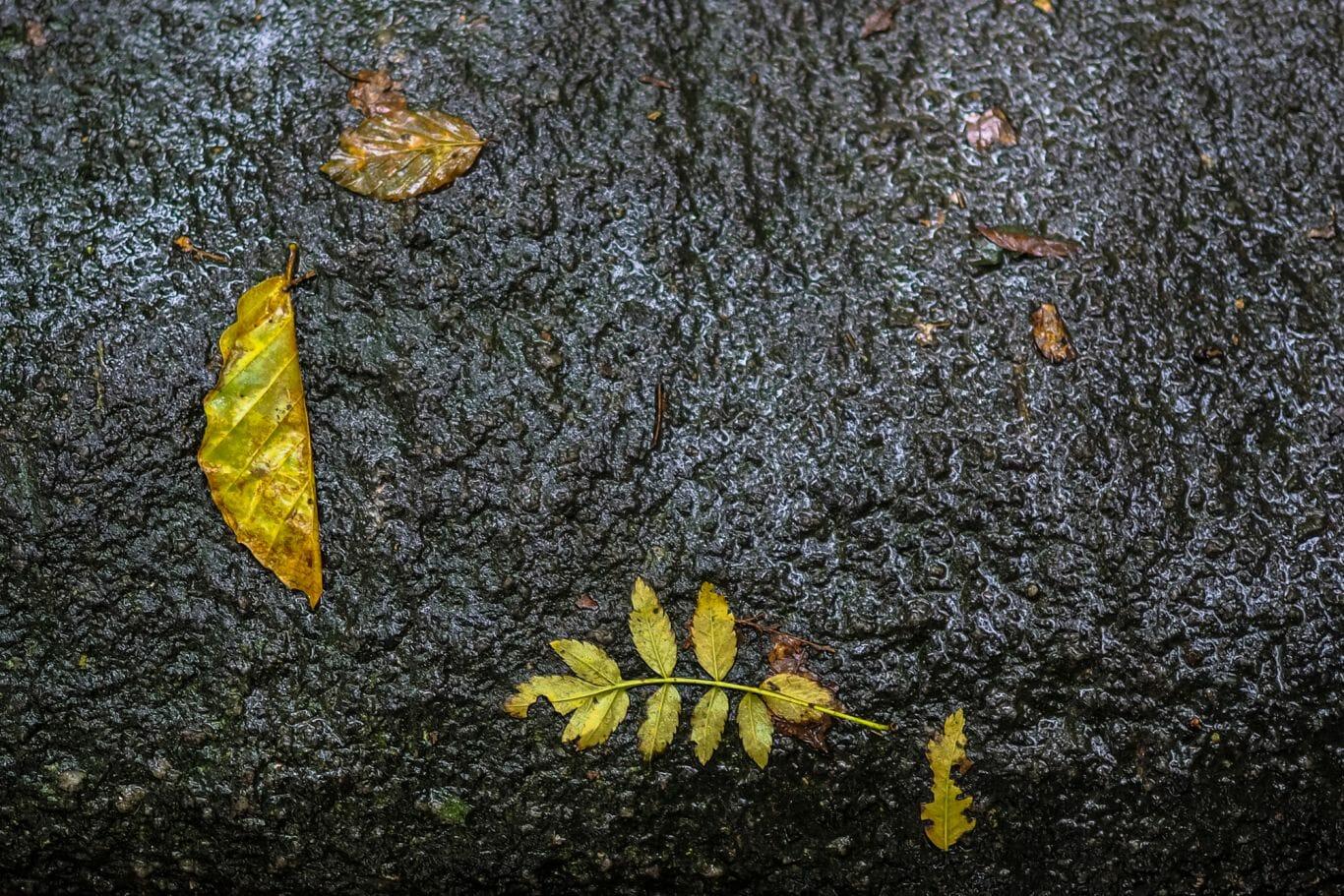 chuva na floresta 7