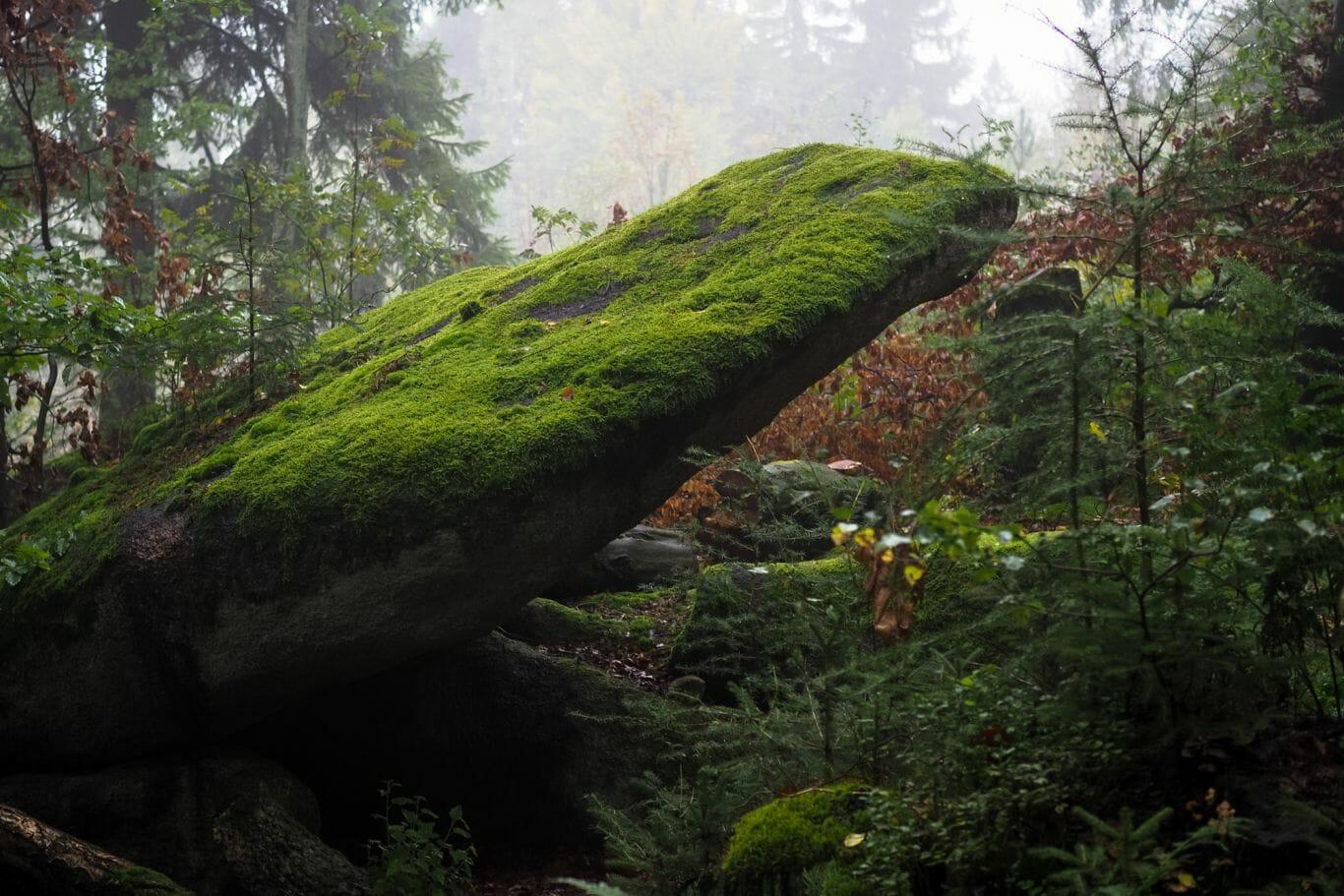 chuva na floresta 8