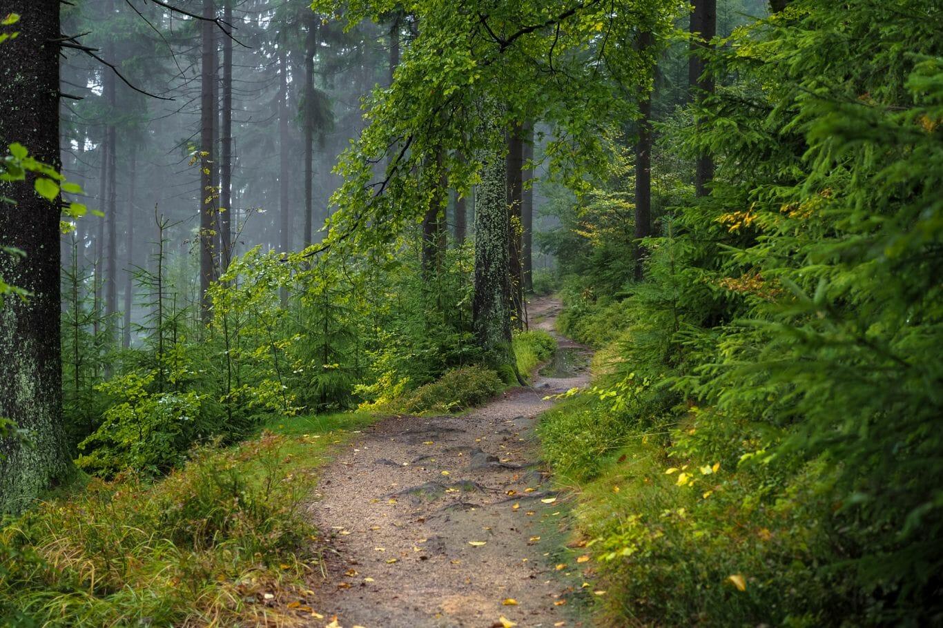 chuva na floresta 9