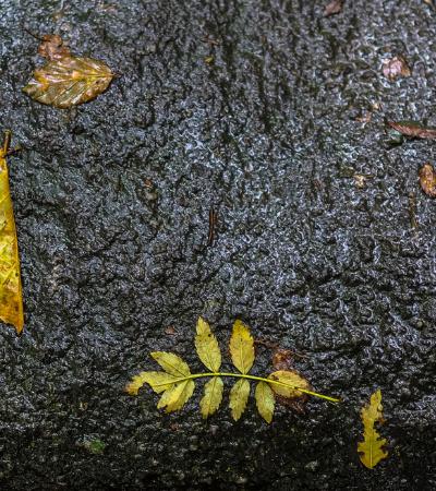 Fotógrafo capta a beleza natural de um dia chuvoso na floresta