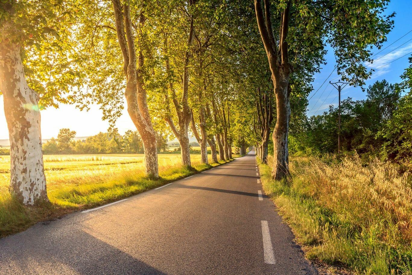 estrada asfalto plástico 3