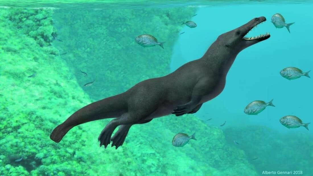fóssil baleia 4 patas 1