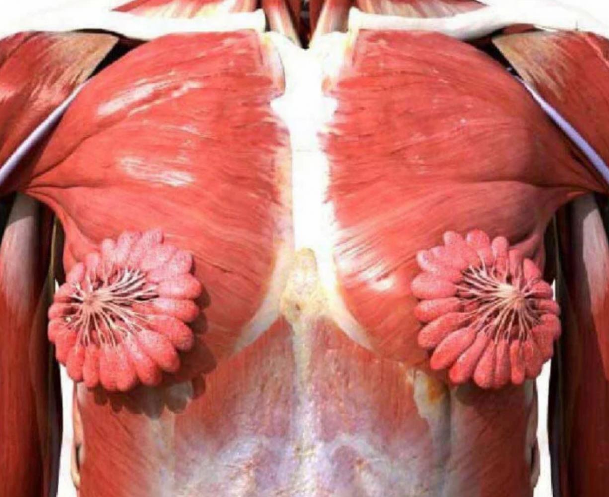 foto real glandulas mamárias 1