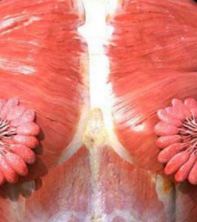 Postaram uma foto real das glândulas mamárias femininas e a internet não está acreditando