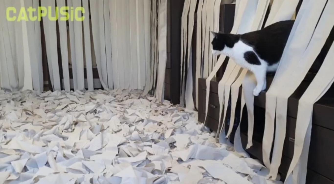gato papel higiênico 6