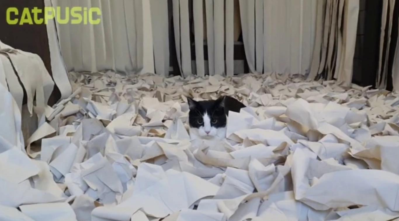gato papel higiênico 8