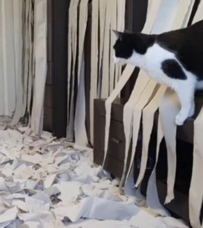 Prova de amor: Dono de gato decora sala com 100 rolos de papel higiênico
