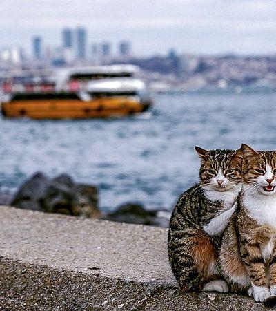 Ele flagrou dois gatos se abraçando e fez registros sem limites de fofura durante uma viagem