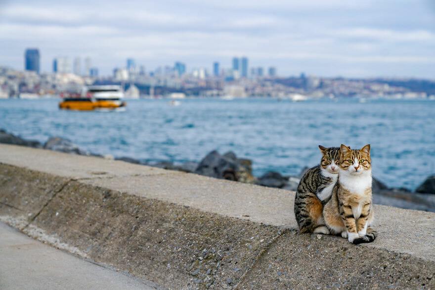Dois gatos abraçados em Istambul