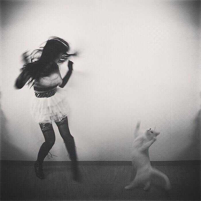 gatos dançando 11