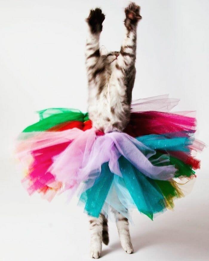 gatos dançando 12