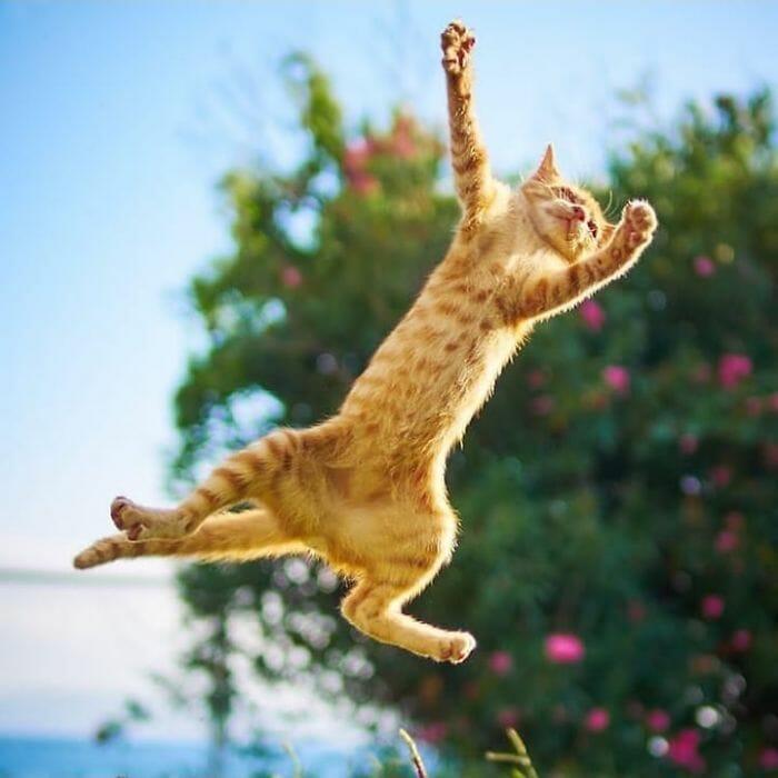 gatos dançando 15
