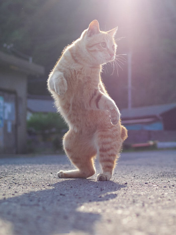 gatos dançando 16