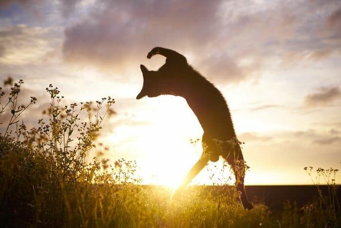 gatos dançando 17