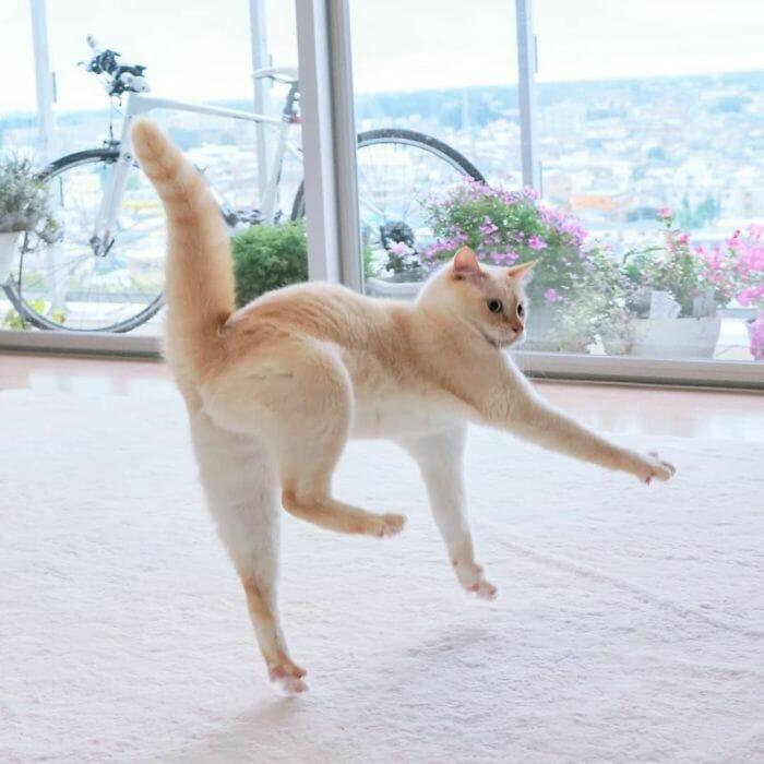 gatos dançando 18