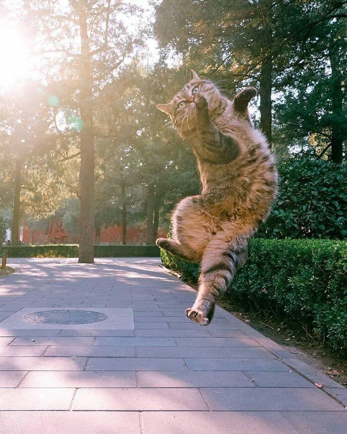 gatos dançando 19