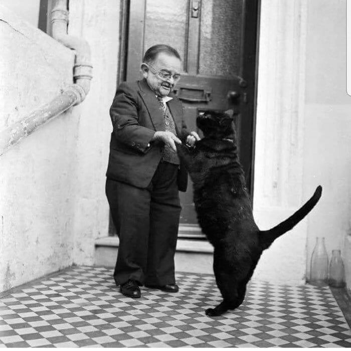 gatos dançando 2